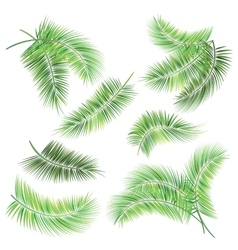 Set of palm tree branches vector