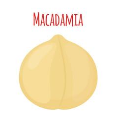 organic macadamia nut oil flat style vector image vector image