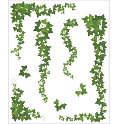 Hanging branches ivy set vector