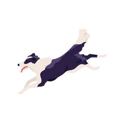 purebred border collie running fast and chasing vector image