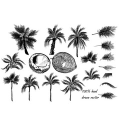 set of detailed palm trees for design vector image