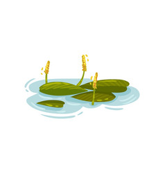 Yellow water lily pistils among leaves vector