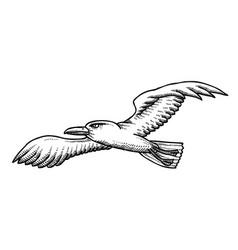 Cartoon image seagull vector
