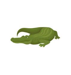 Green crocodile predatory amphibian animal vector