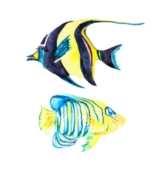 Isolated fish Tropical fish on a white background vector