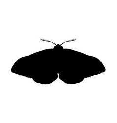 Moth insect black silhouette animal vector