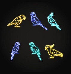 Parrot icons set in glowing neon style vector