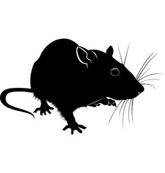 Silhouette of rat isolated on white background vector