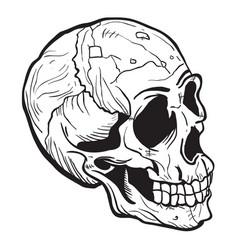 skull black vector image