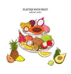 hand drawn exotic fruits template vector image vector image