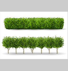 bush in the form of a green hedge vector image
