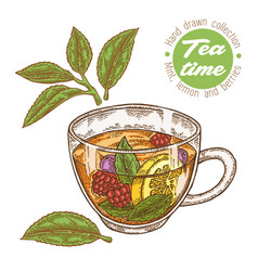 Hand drawn cup of tea herbal tea with lemon mint vector
