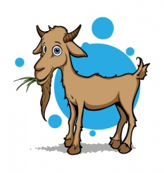 little goat vector image
