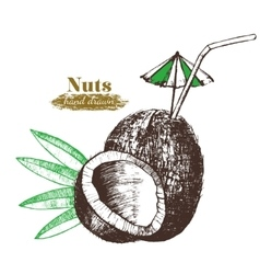 Coconut Nut Cocktail with Leaf Hand Draw Sketch vector image