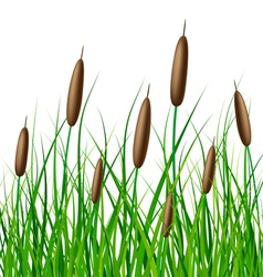 reed with grass vector image vector image