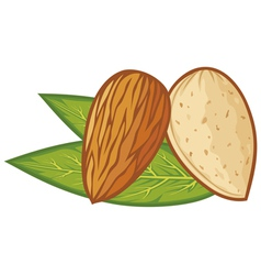 almond with leaves vector image