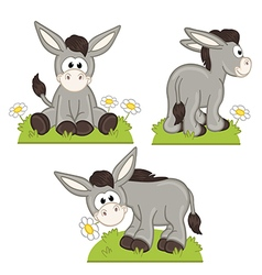 set of isolated donkey in meadow vector image