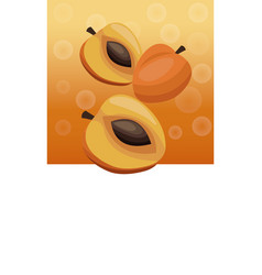Brochure apricot fruit blank vector