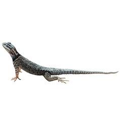 A lizard vector image
