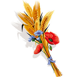 bunch of ears of wheat and poppy flowers and vector image
