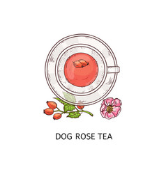 dog rose tea in glass teacup and plate duo vector image