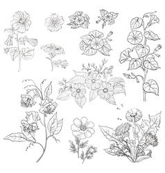 Flowers set outline vector