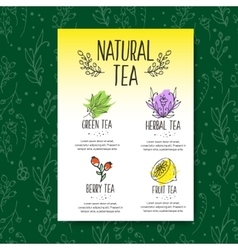 Herbal tea menu brochure Organic herbs and wild vector