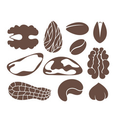 nut set vector image