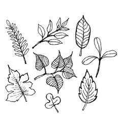 sketch of leaf design vector image
