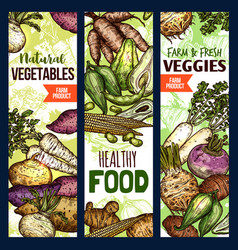 healthy food banners exotic vegetables vector image