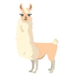 Lama alpaca vector