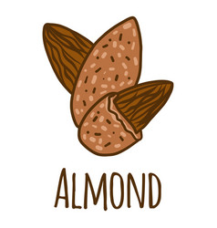almond icon hand drawn style vector image