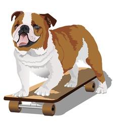 Bulldog on skateboard vector image
