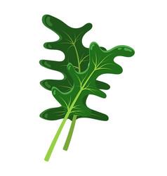cartton concept of arugula plant icon vector image