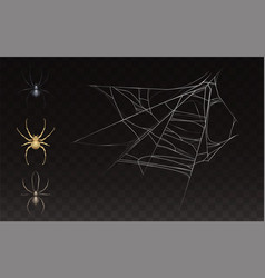 collection of realistic web with spider vector image