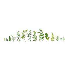 designer elements set collection green plants vector image