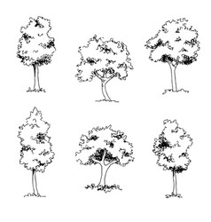 Tree sketch architect hand drawing vector