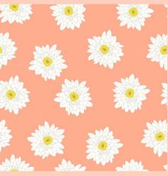 White chrysanthemum on pink peach background vector
