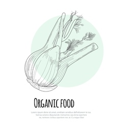 Hand drawn fennel over white background vector image