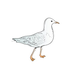 sea gull vector image vector image