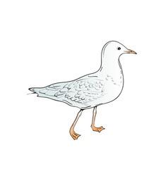 sea gull vector image
