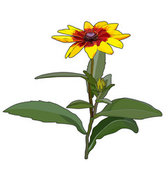Flower rudbeckia vector