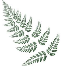 green fern leaves on white background vector image