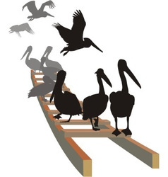 Pelicans on the ladder vector