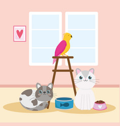 pets cats parrot food canned fish domestic animals vector image