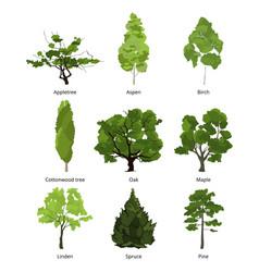 Set of green garden trees nature vector