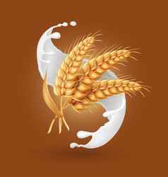 Wheat ears or barley cereals in milk splash vector