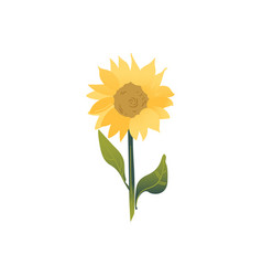 cartoon flat summer flower yellow and green vector image