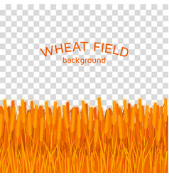 golden wheat field on checkered background vector image