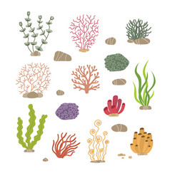 Seaweed corals and stones underwater natural vector